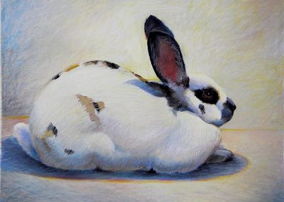 kengoldmanfineart-Calico Rabbit 1-Pastel-18x24 - SOLD