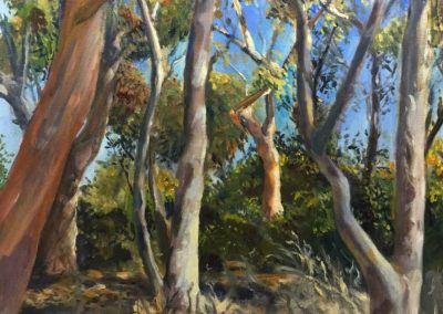 kengoldmanfineart_UCSD Eucalyptus Grove_Oil_14x18 - SOLD