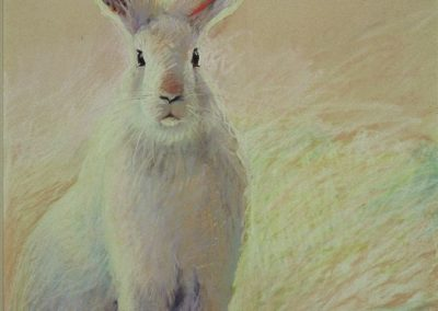 Ken Goldman_Pastel_Snow Hare, 24x18 - SOLD