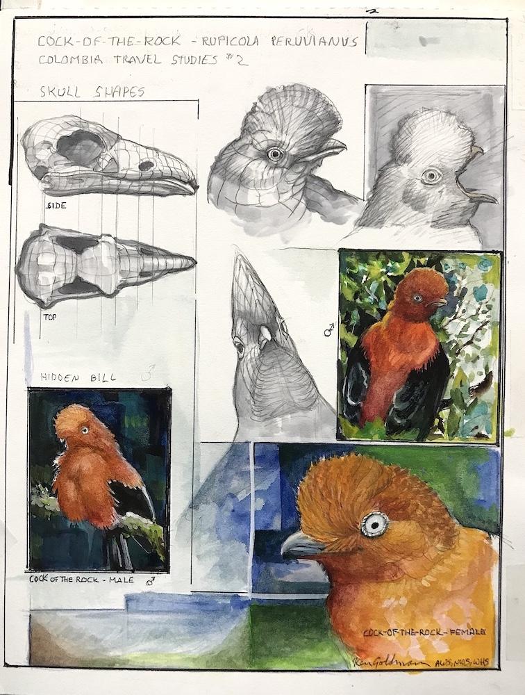 Ken Goldmanfineart_Studies from Colombia 1_Watercolor_12x9