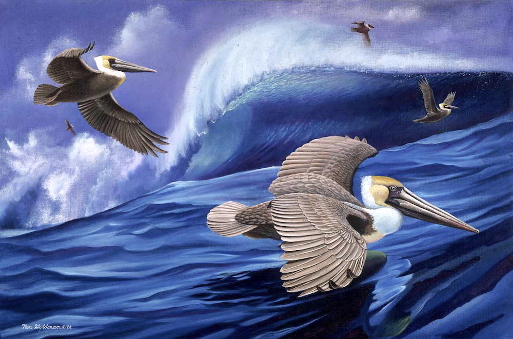 Ken Goldmanfinear_Pelican and Surfable Wave, Oil 30x40 Sold