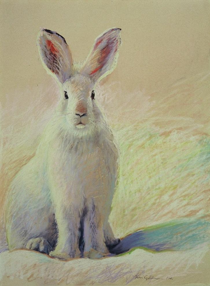 Ken Goldmanfineart_Snow Hare, Pastel 22x14 Sold